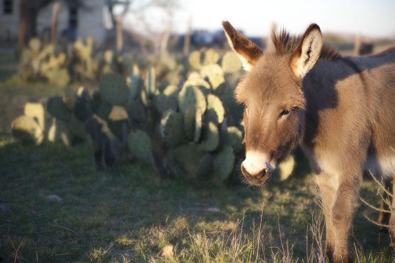 BethCupitt_donkey2